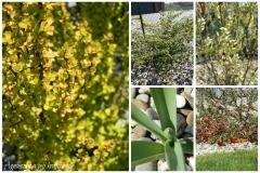 Zahrada konec dubna1