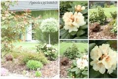 Zahrada květen6