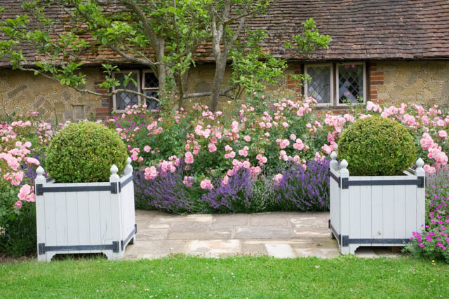 via https://www.gardenia.net/garden/a-fabulous-duo-rose-bonica-and-lavender-hidcote