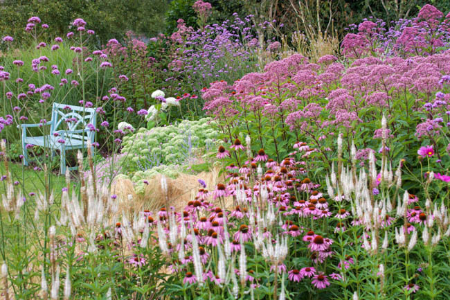 via https://www.gardenia.net/garden/A-Prairie-Style-Garden-Idea-with-Echinacea-Veronicastrum-and-Sedum
