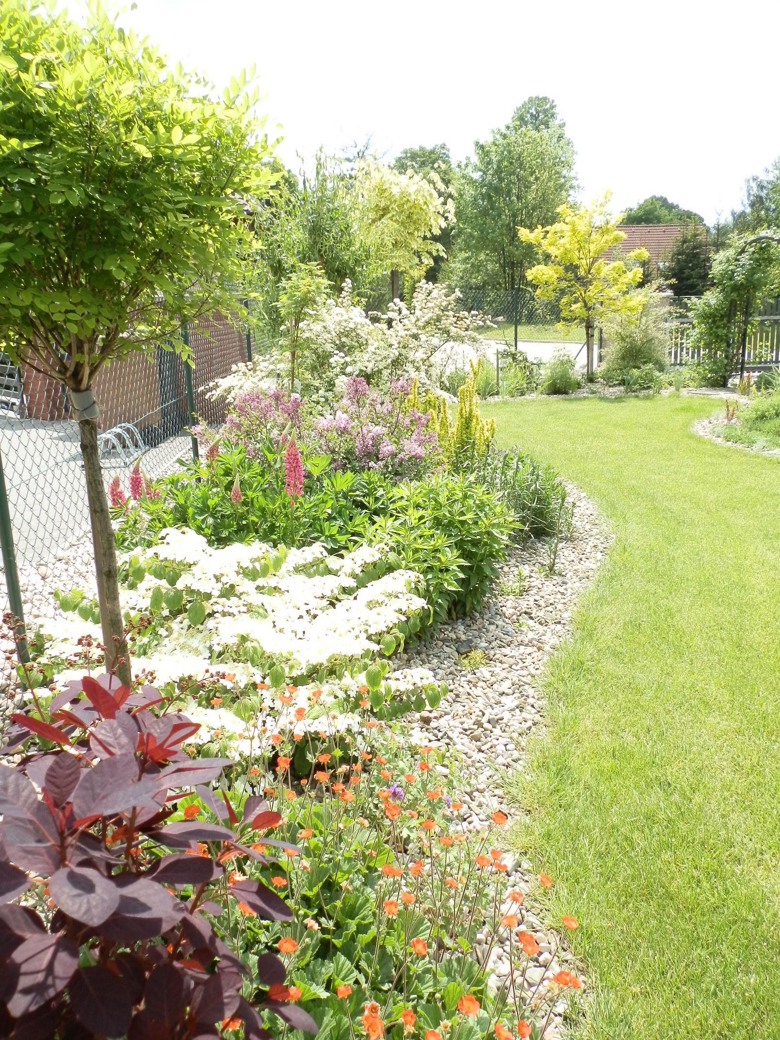 212b24324a9 Pozdně jarní zahrada na konci května. V popředí vínově červené listy .
