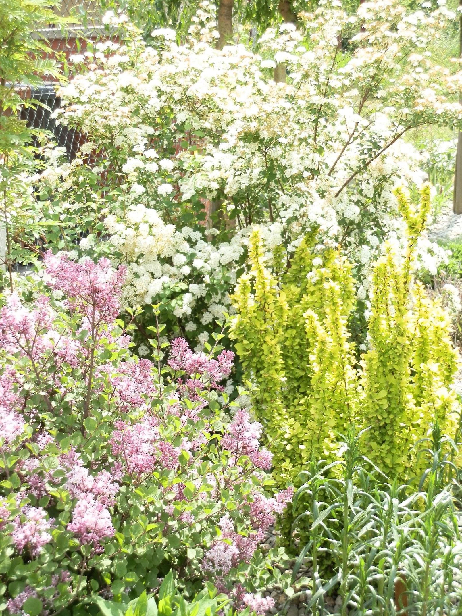 Naše pozdně jarní zahrada.