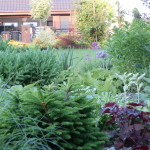 Jak osázet záhon založený na těžších, jílovitých půdách