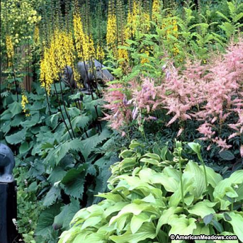 via http://www.americanmeadows.com/pre-planned-gardens/shade-garden-spring-12-6