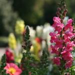 Jak založit květinové záhony kolem plotu