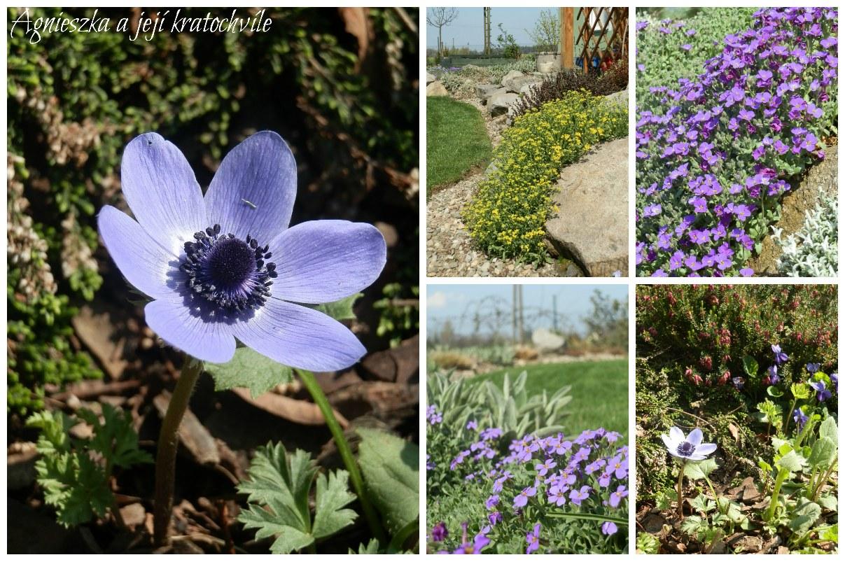 Zahrada polovina dubna 2016_3