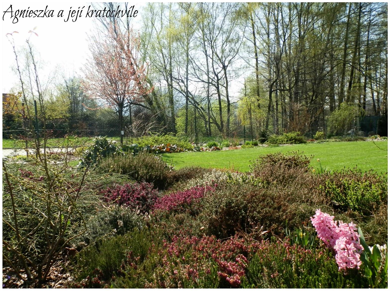 Zahrada polovina dubna 2016_8