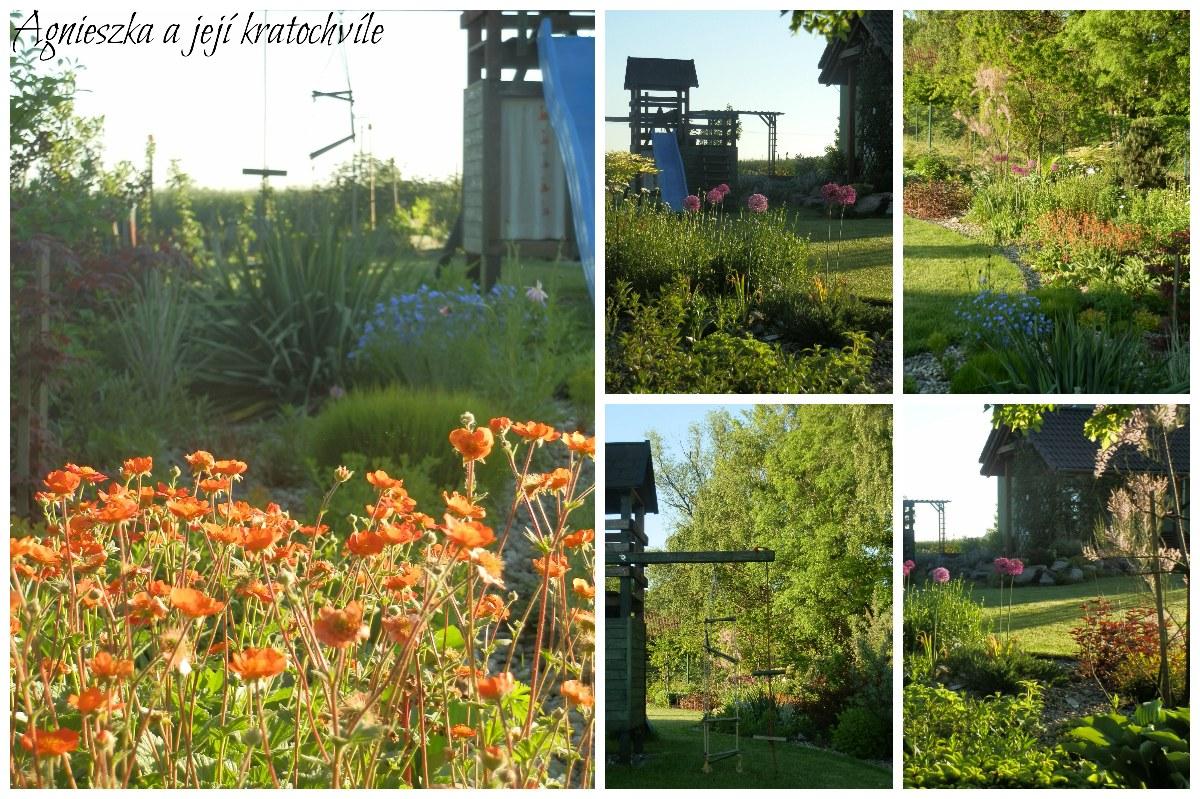 Zahrada koncem května 2016_11