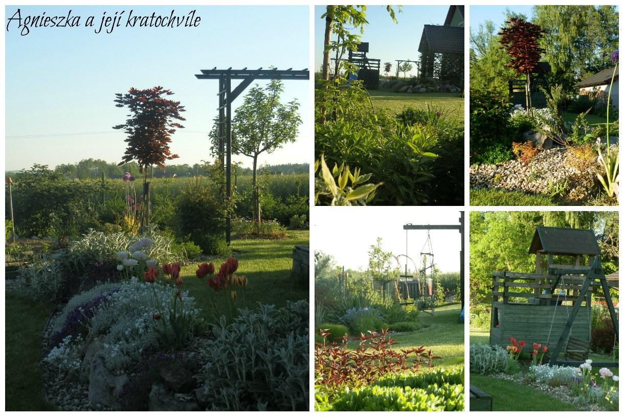 Zahrada koncem května 2016_12