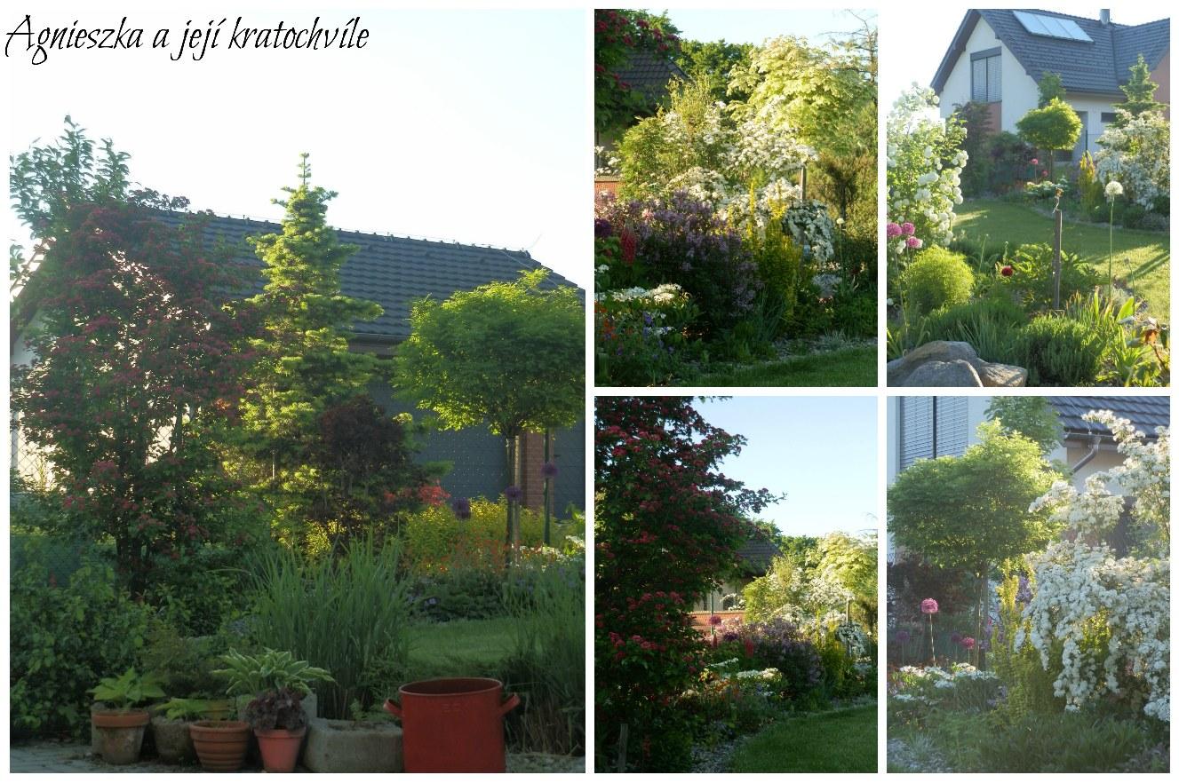 Zahrada koncem května 2016_3