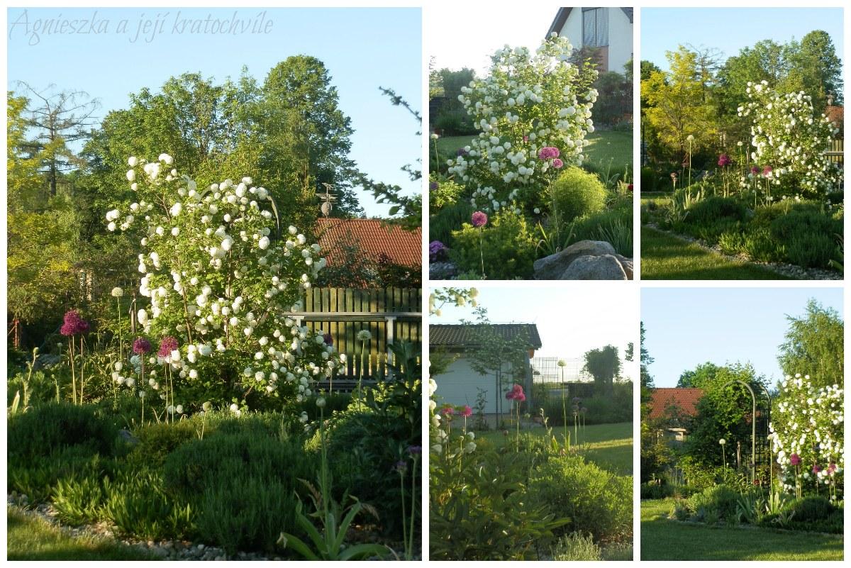 Zahrada koncem května 2016_4