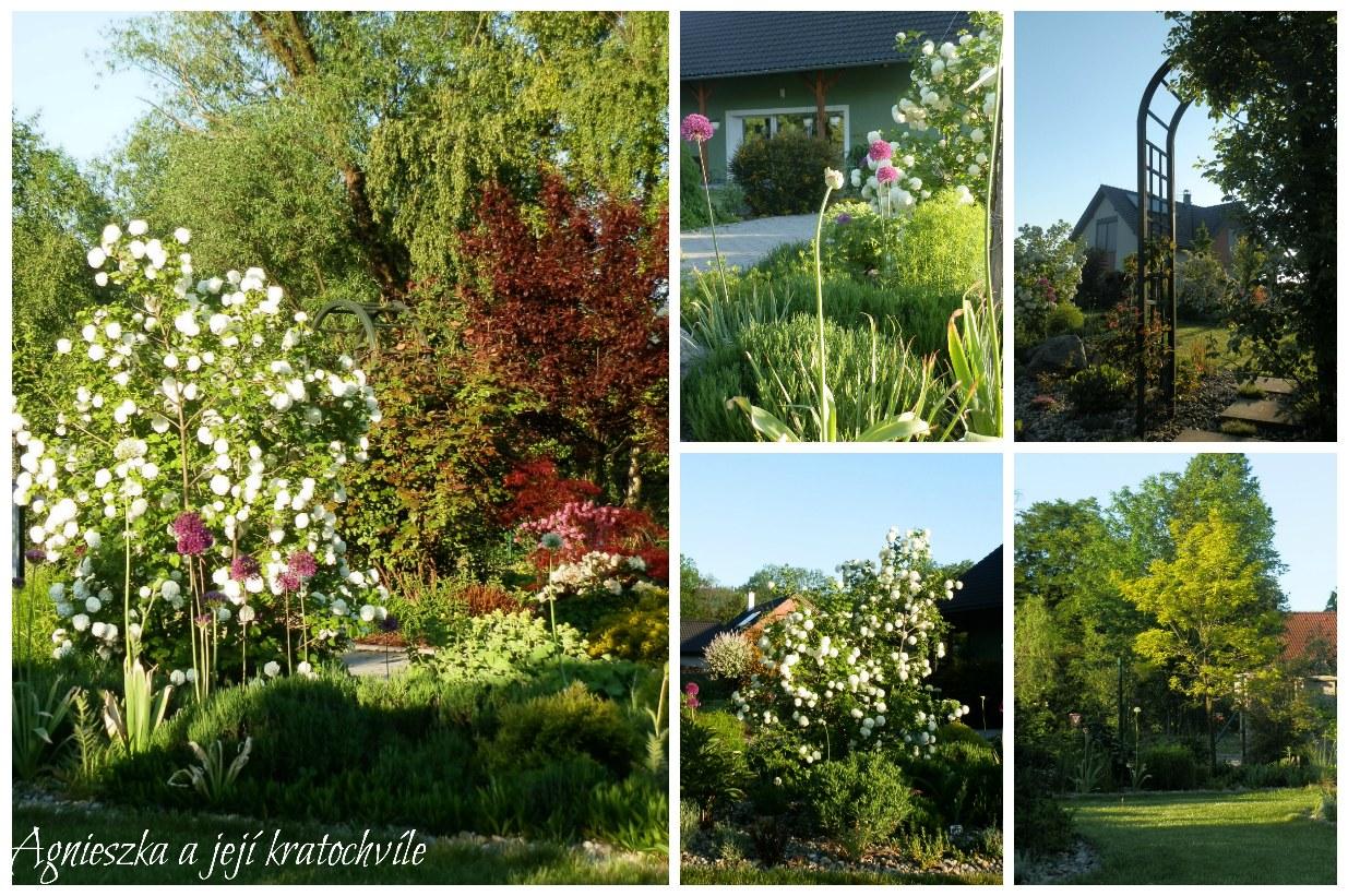 Zahrada koncem května 2016_5