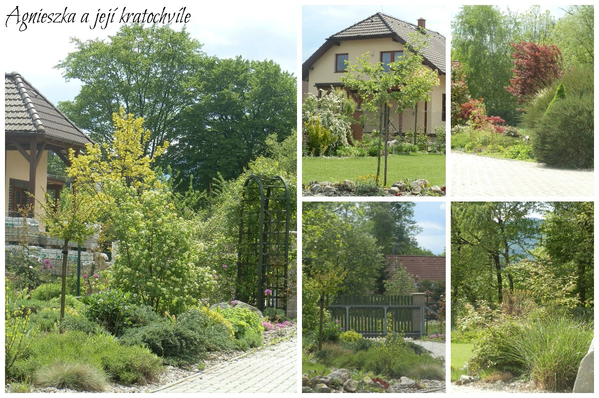Zahrada v polovině května 2016_1