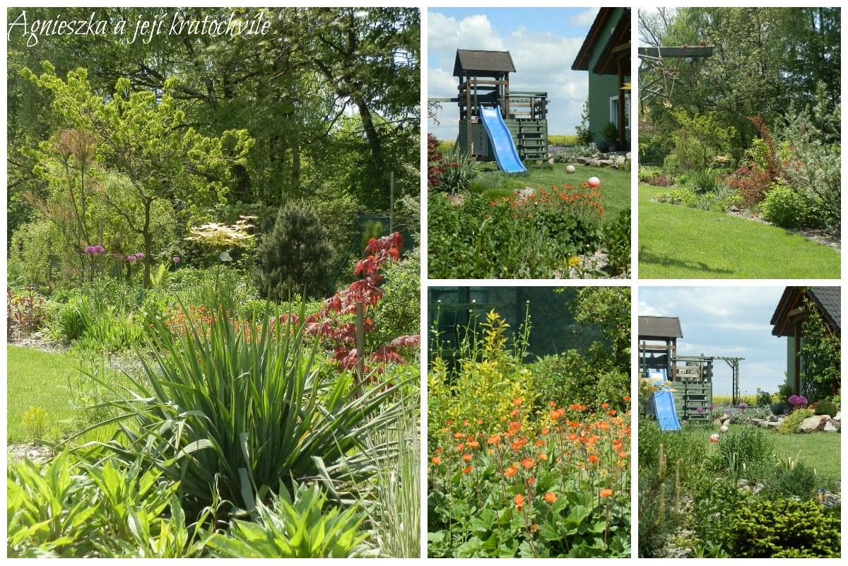 Zahrada v polovině května 2016_10