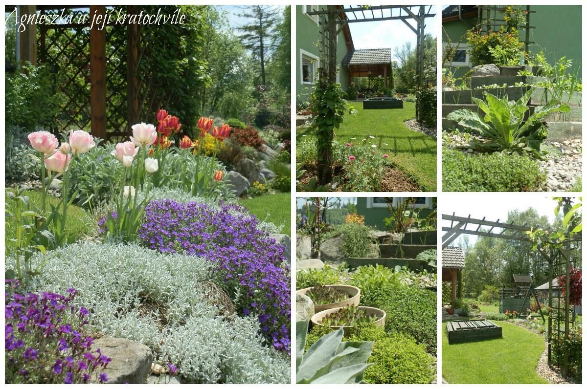 Zahrada v polovině května 2016_12