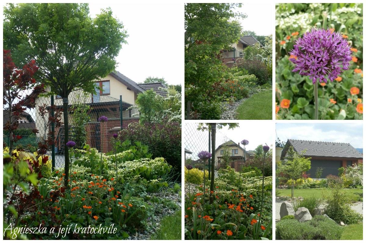 Zahrada v polovině května 2016_4