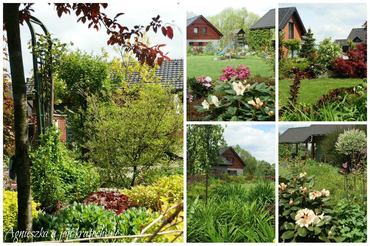 Zahrada v polovině května 2016_7