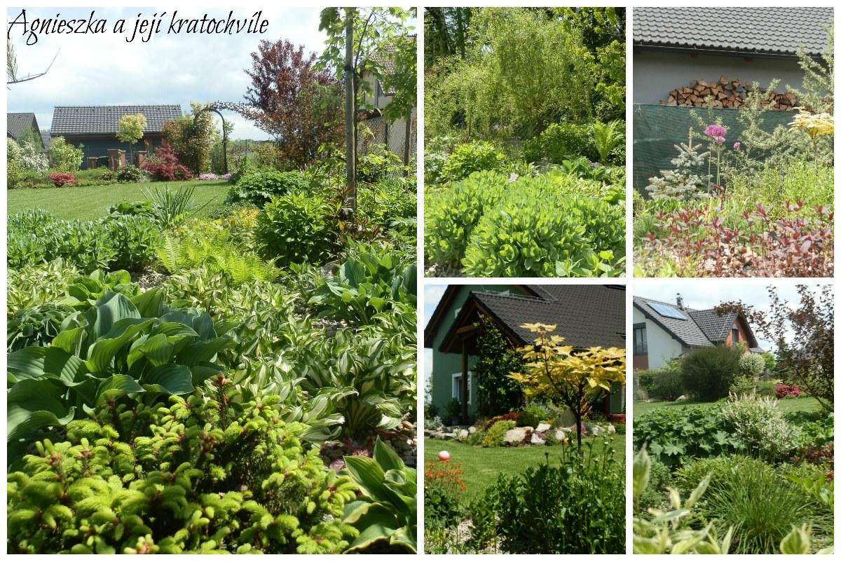 Zahrada v polovině května 2016_9