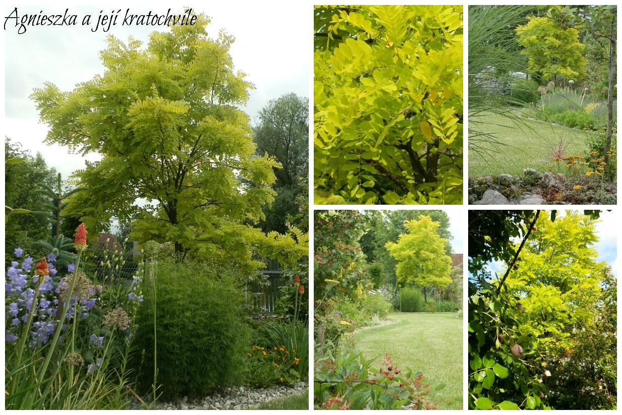 Zahrada polovina června 2016_16