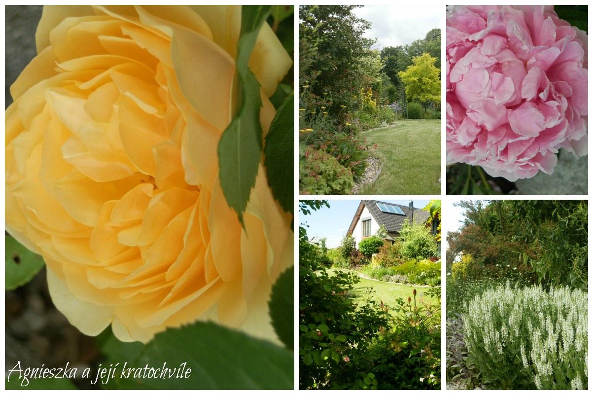 Zahrada polovina června 2016_19
