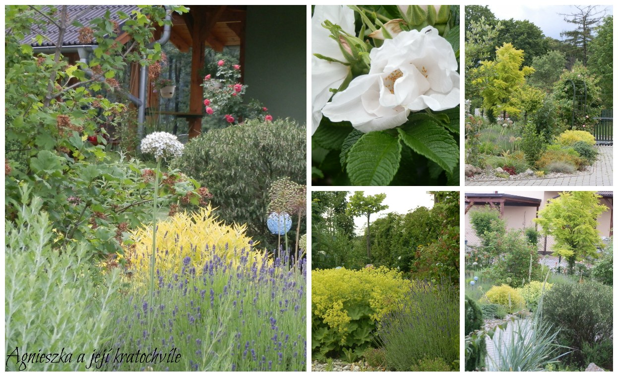 Zahrada polovina června 2016_22