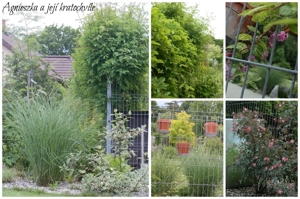 Zahrada polovina června 2016_25