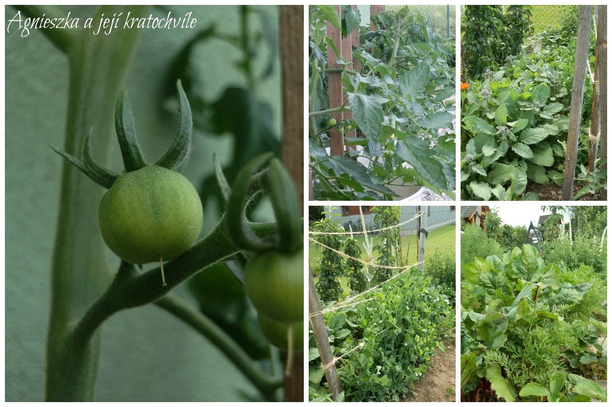 Zahrada polovina června 2016_27