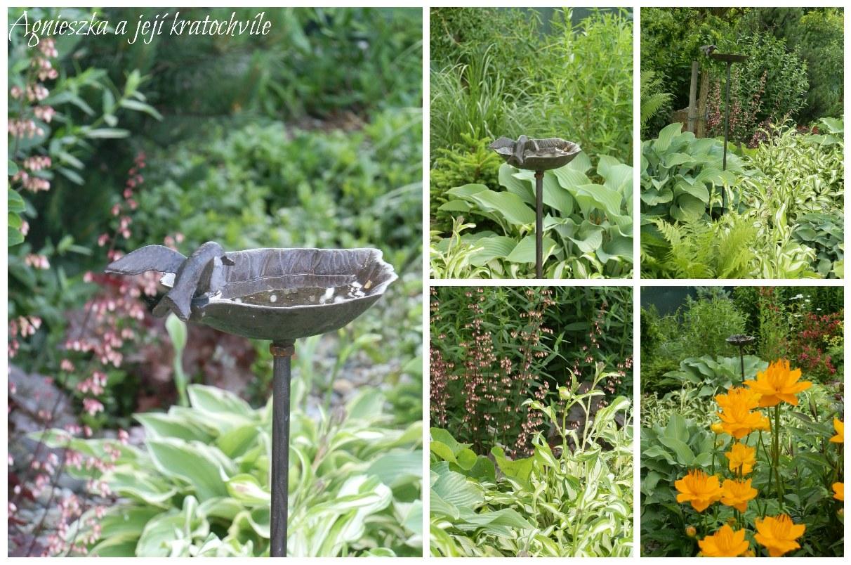 Zahrada polovina června 2016_3