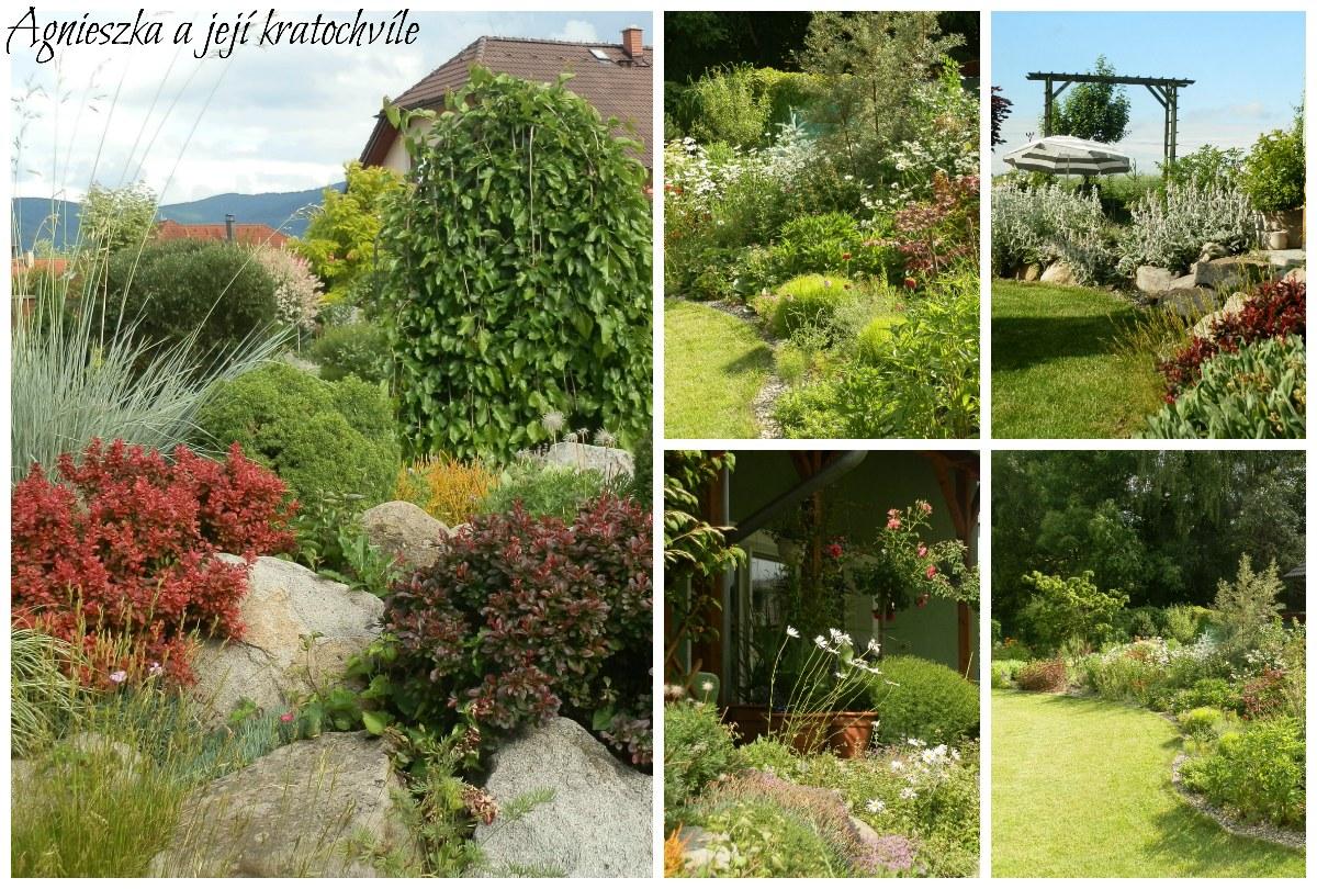 Zahrada polovina června 2016_30