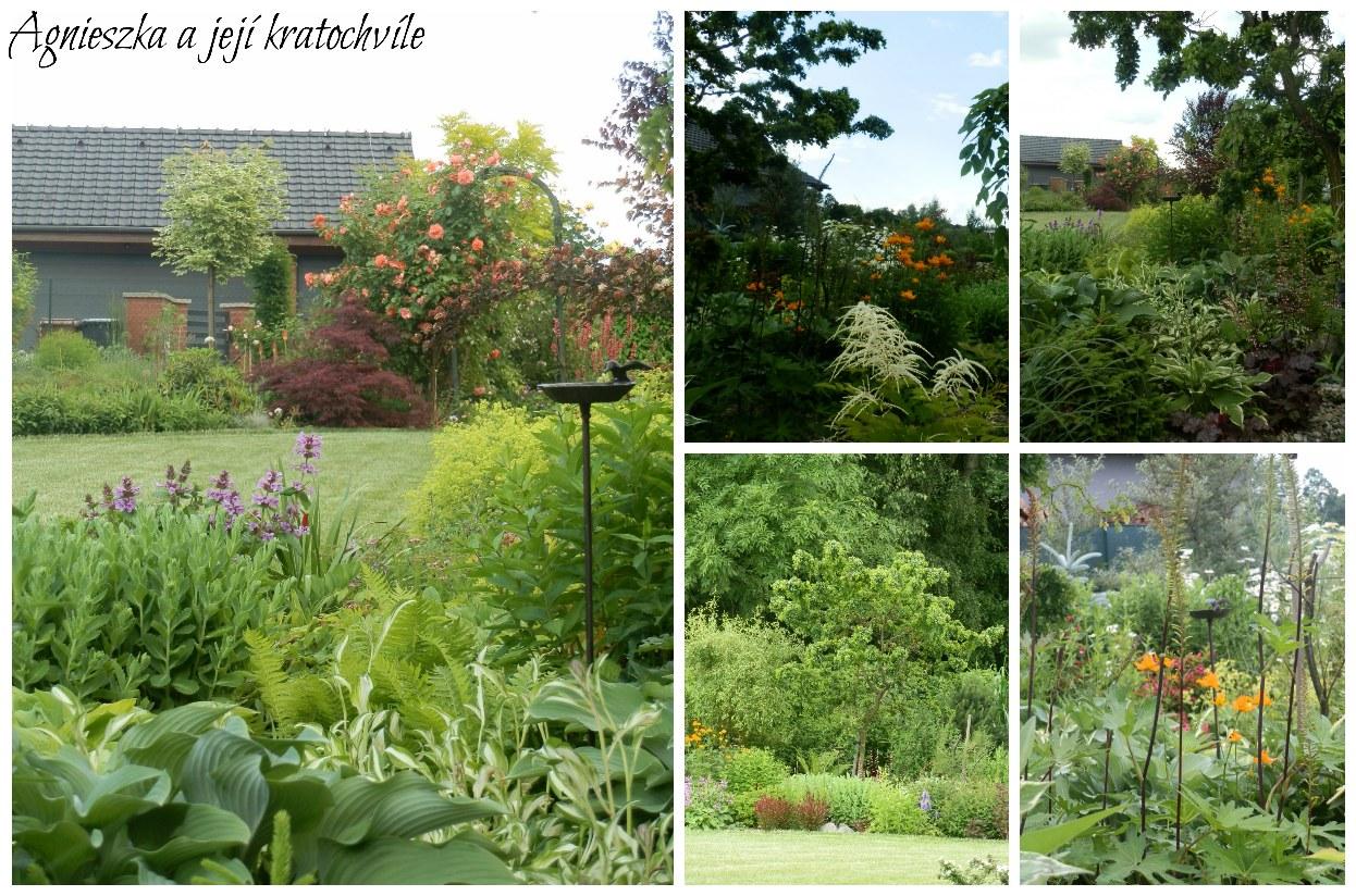 Zahrada polovina června 2016_5
