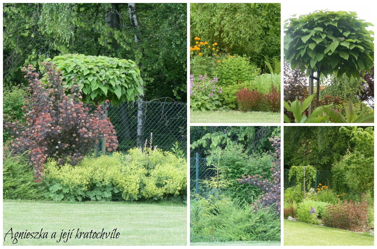 Zahrada polovina června 2016_6