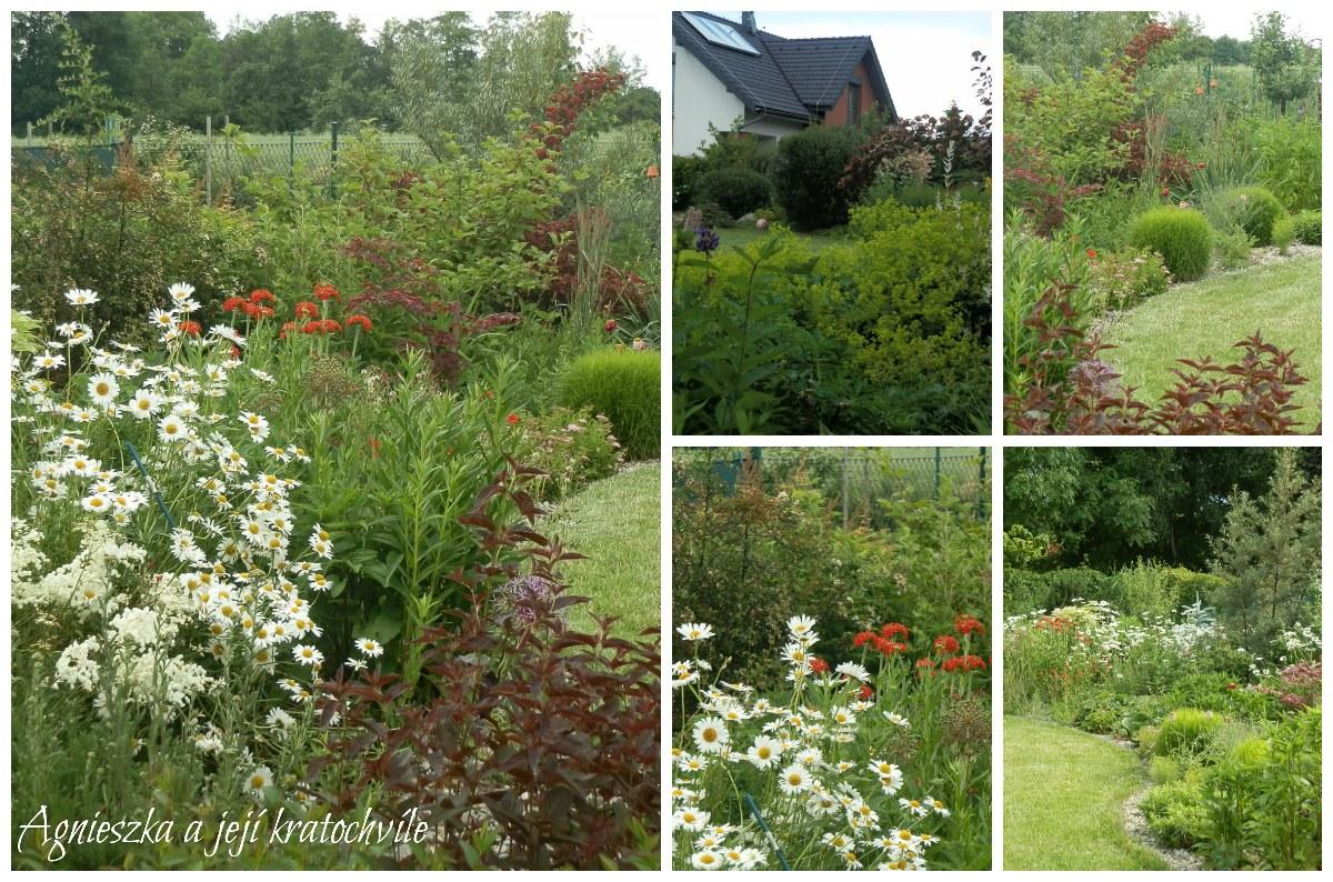 Zahrada polovina června 2016_8