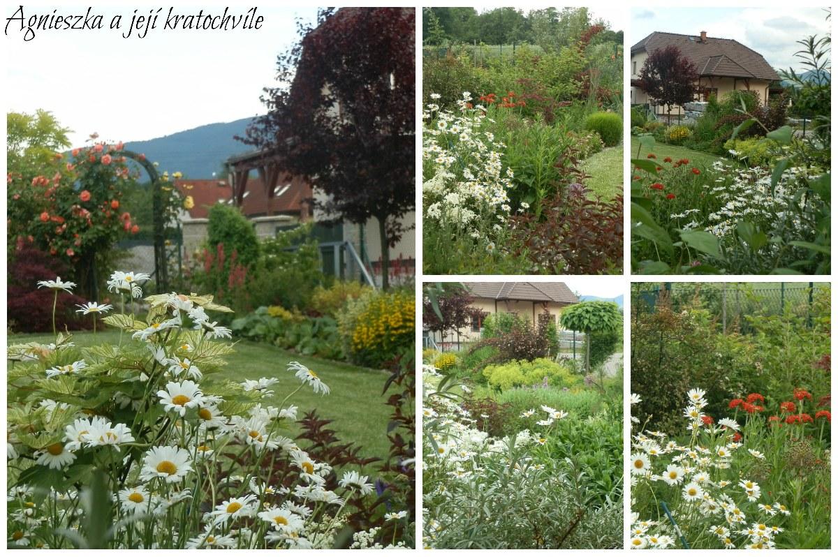 Zahrada polovina června 2016_9