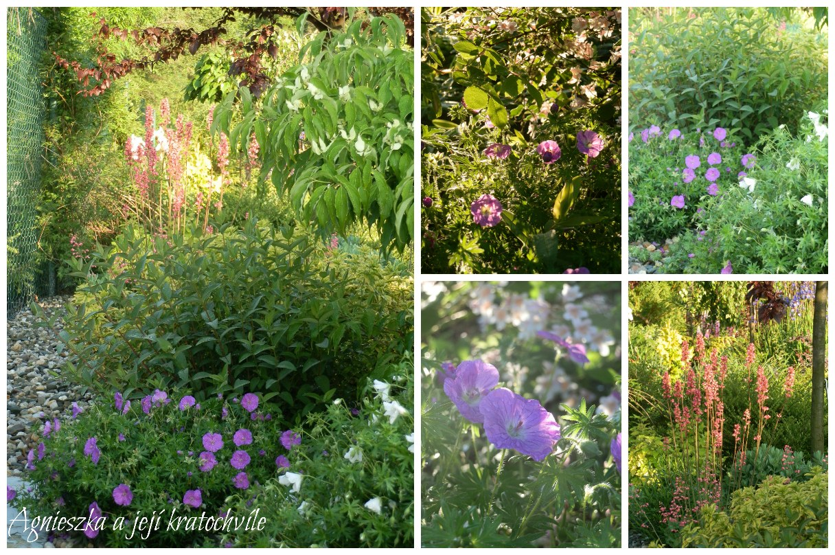 Zahrada začátkem června 2016_1