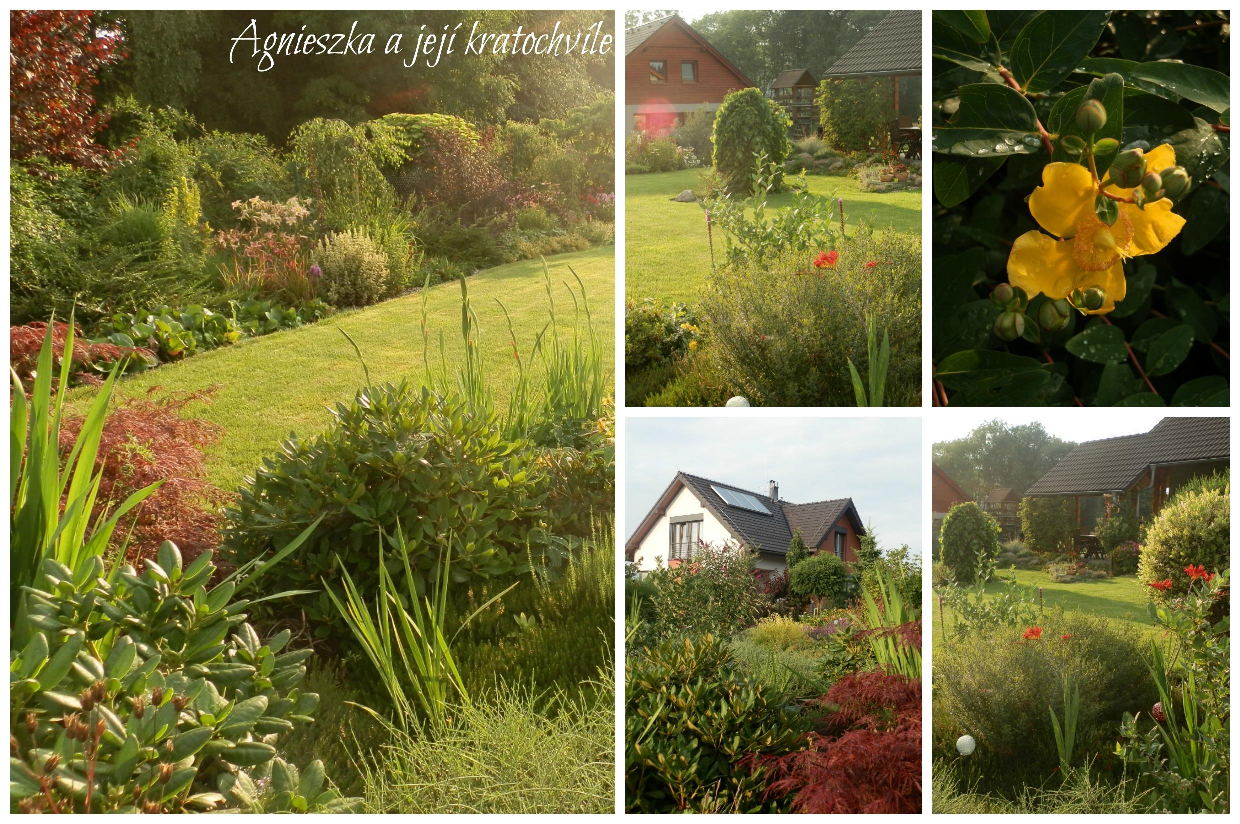 Zahrada 2. polovina července 2016_1