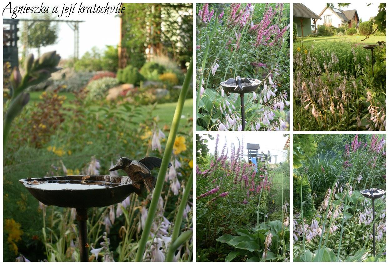 Zahrada 2. polovina července 2016_9