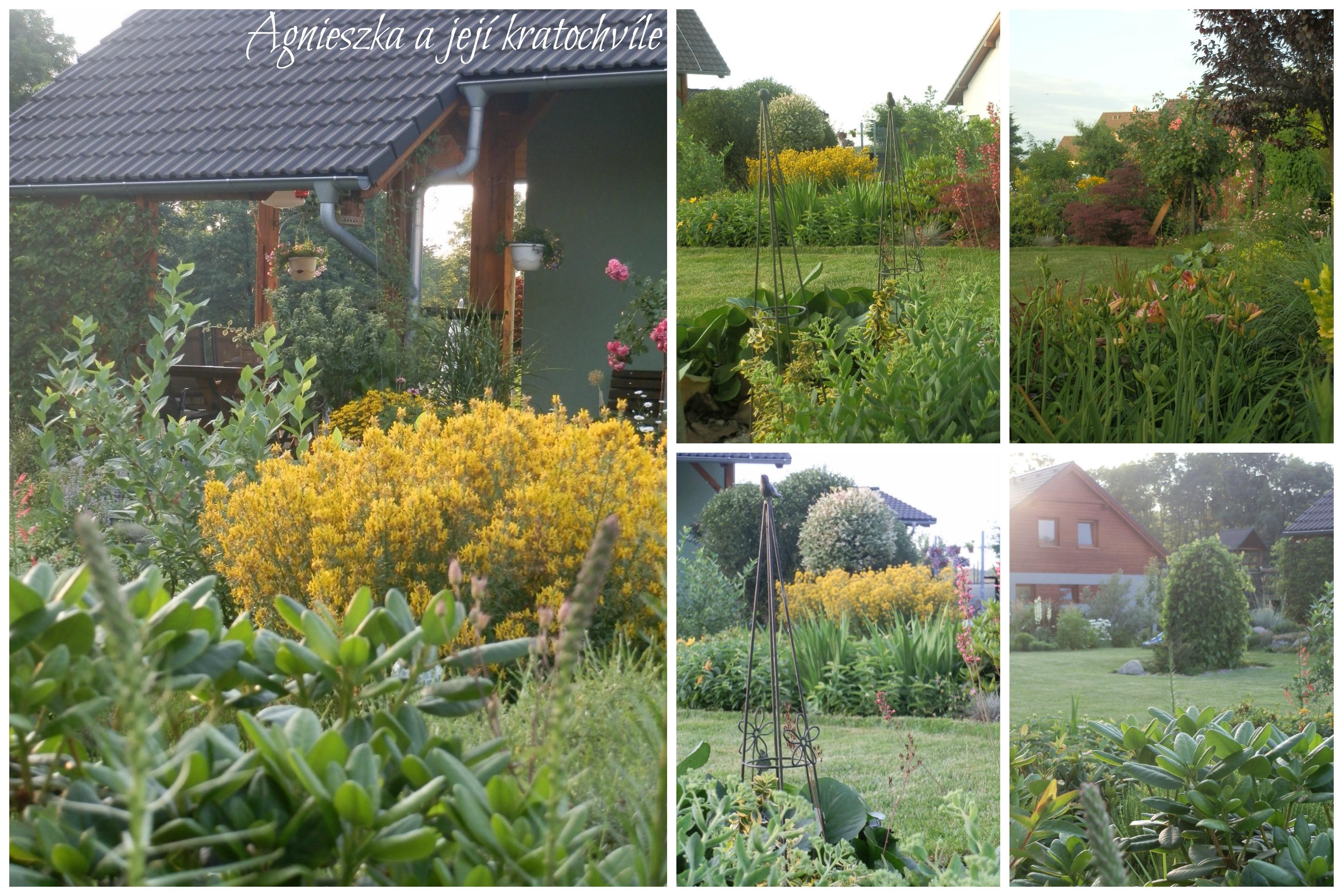 Zahrada přelom červen a červenec 2016_10
