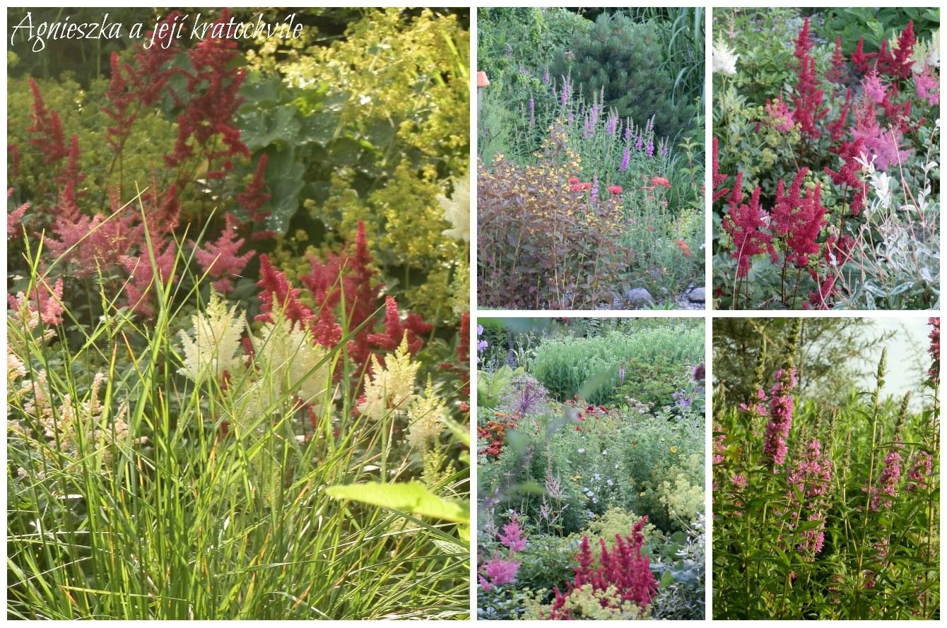 Zahrada přelom červen a červenec 2016_11