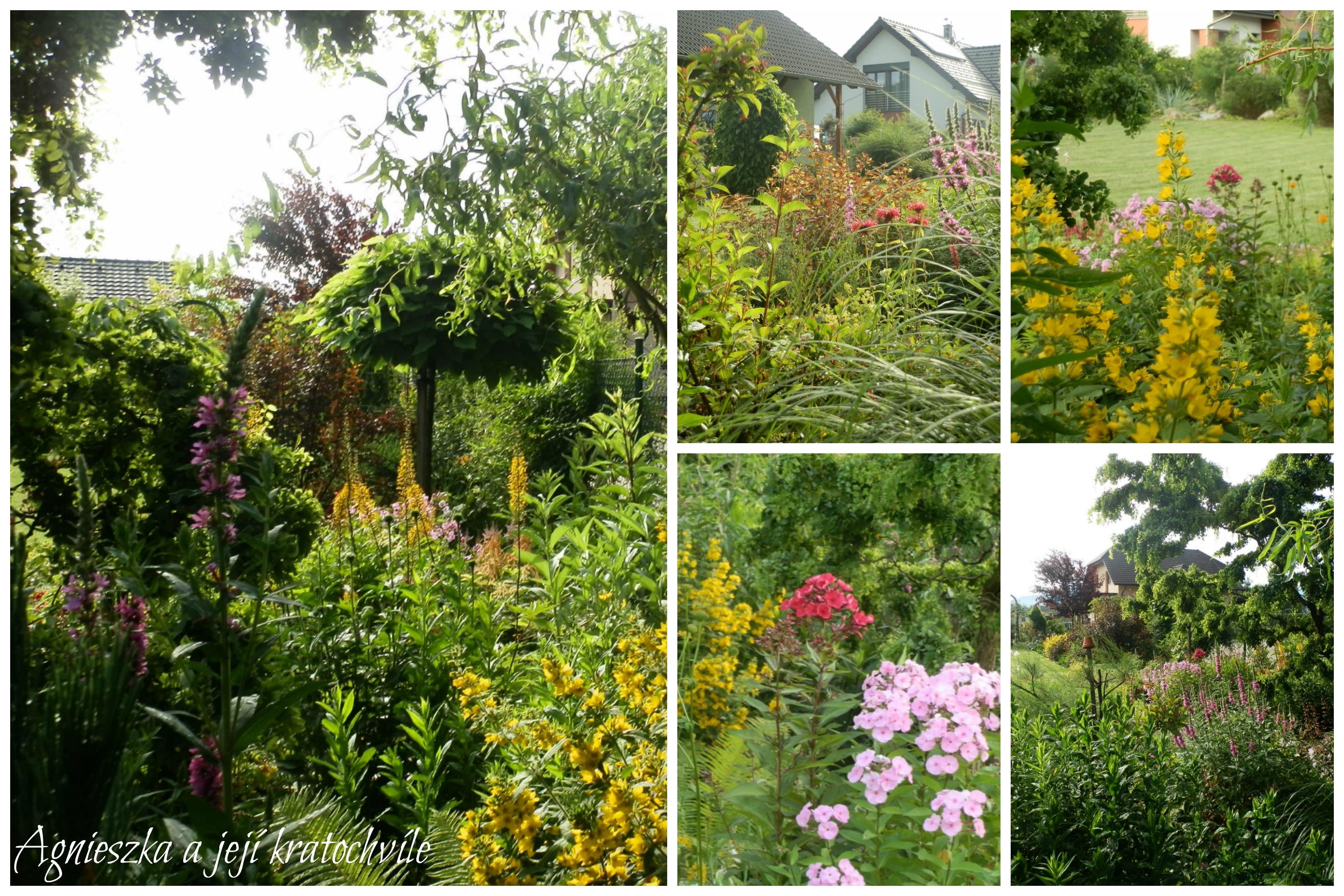 Zahrada přelom červen a červenec 2016_14