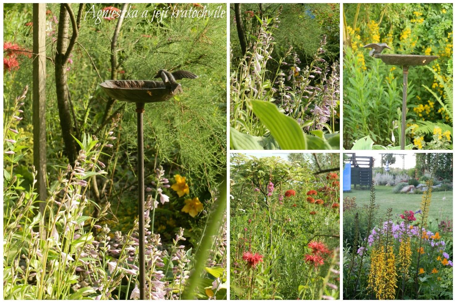 Zahrada přelom červen a červenec 2016_15