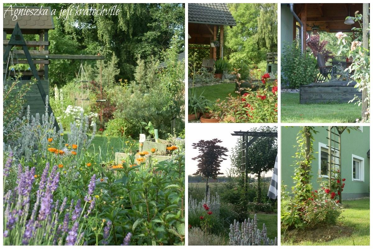Zahrada přelom červen a červenec 2016_16