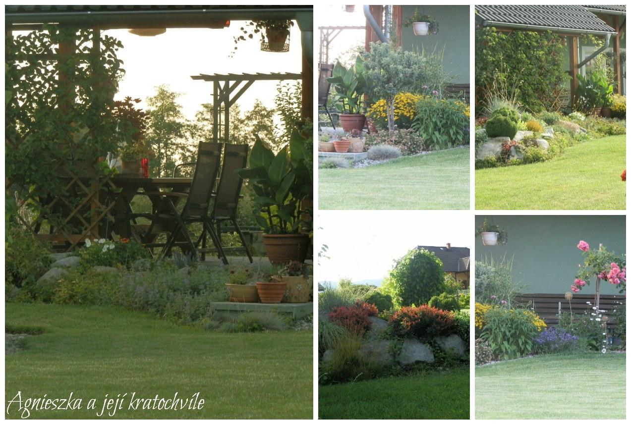 Zahrada přelom červen a červenec 2016_17