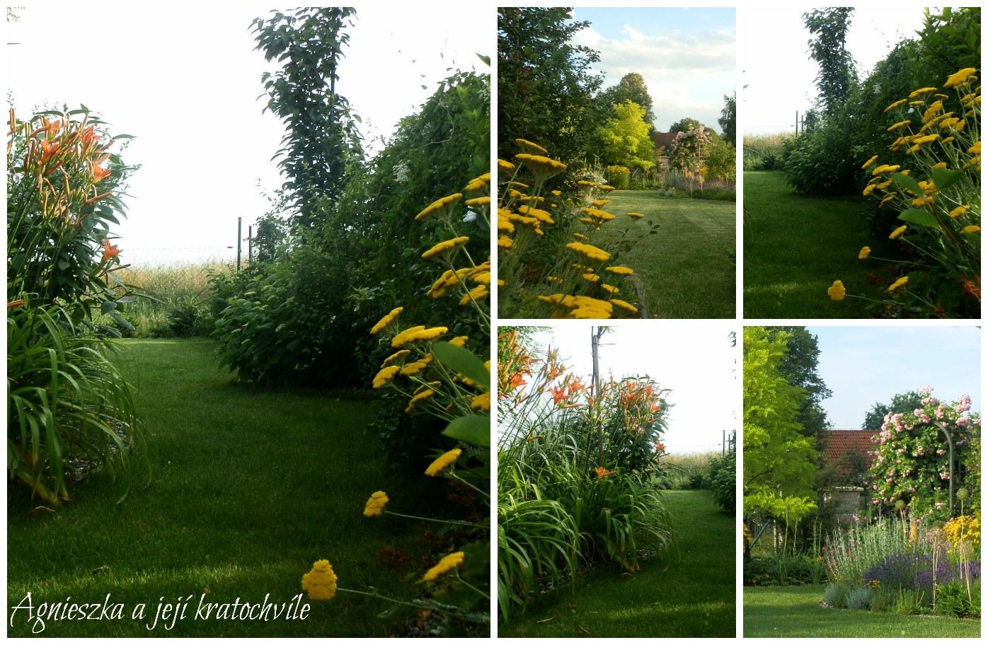 Zahrada přelom červen a červenec 2016_3