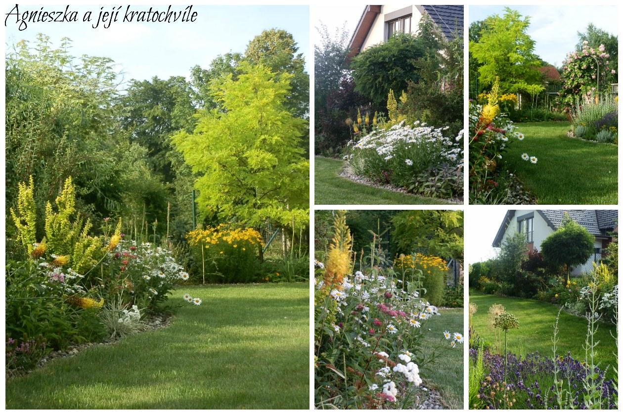 Zahrada přelom červen a červenec 2016_4