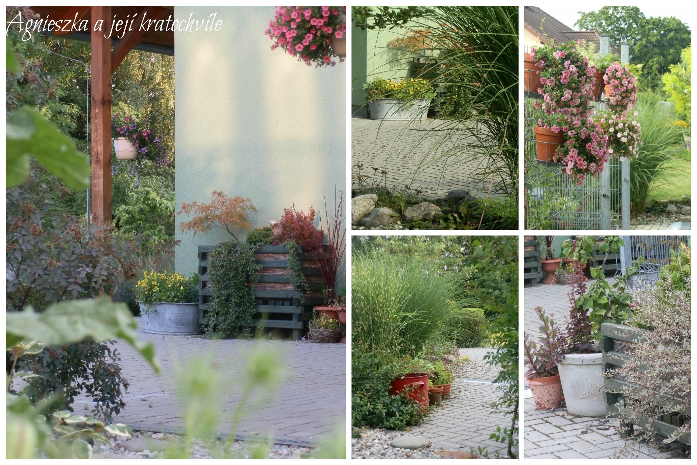 Zahrada přelom červen a červenec 2016_5