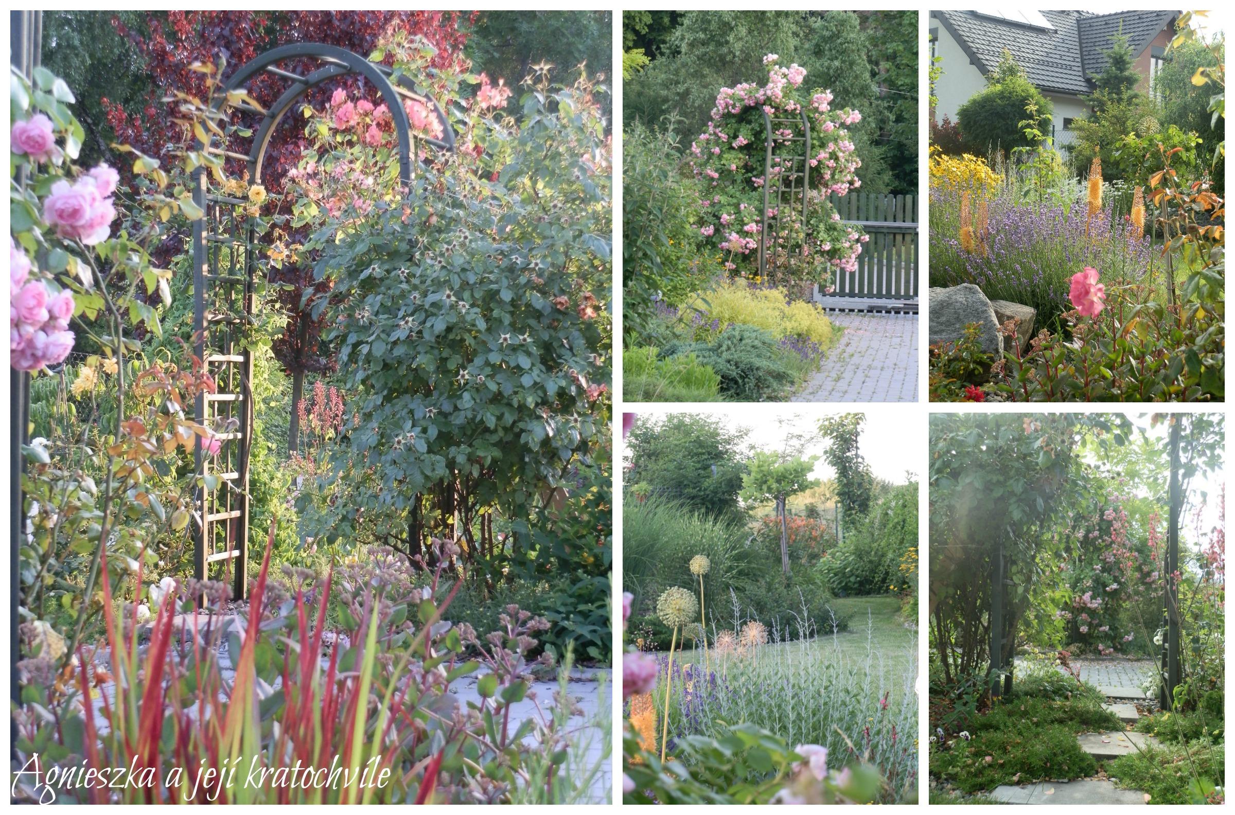 Zahrada přelom červen a červenec 2016_6