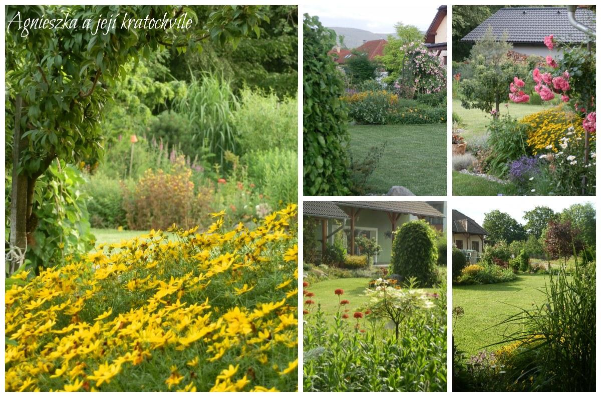 Zahrada přelom červen a červenec 2016_7