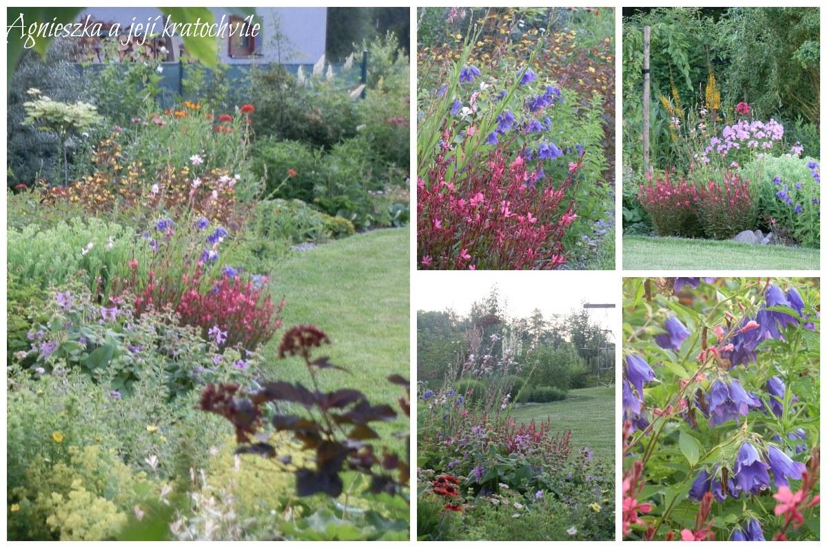 Zahrada přelom červen a červenec 2016_9