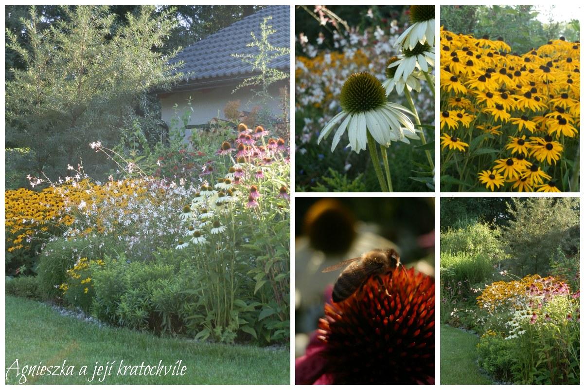Zahrada první dekáda srpna 2016_2