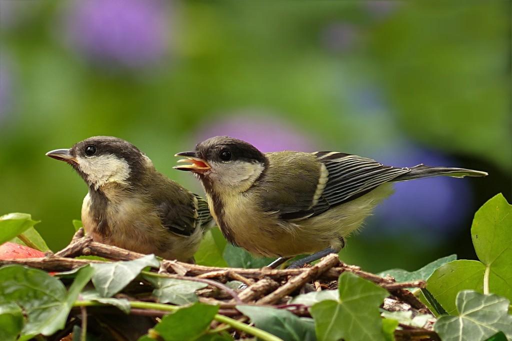 bird-861785_1920